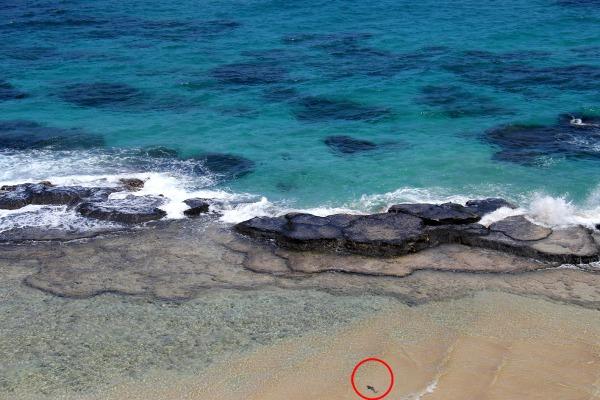 Aquele momento em que a gente para pra ver as fotos em casa e encontra um tubarão baby na imagem. Não é demais? rs