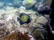 Snorkeling na Baía dos Porcos