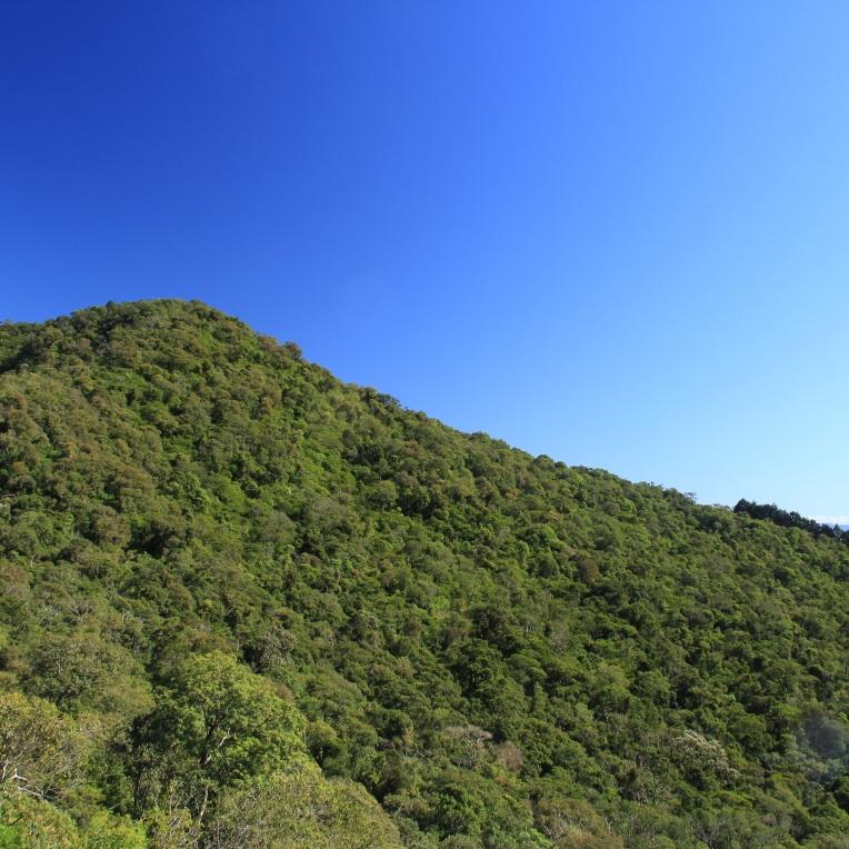 O Monte Verde :-)