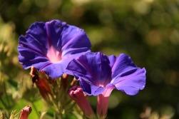 Flores no Hostel Catavento