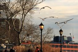 Battery Park - eu simplesmente amo essa foto! <3