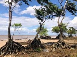 Praia de Barra Velha, Soure, Ilha de Marajó, Pará