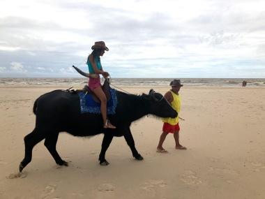 Búfalos pela praia